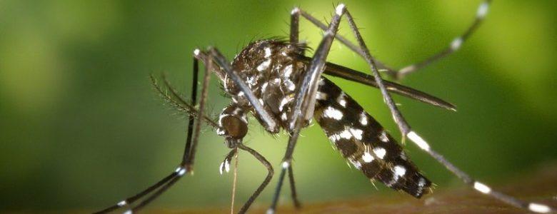difendersi-zanzara-tigre_800x529